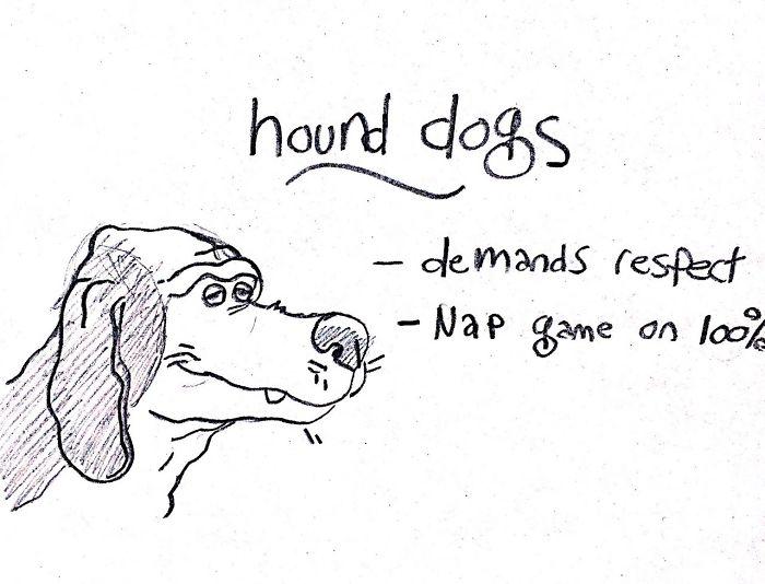 Веселый путеводитель по породам собак