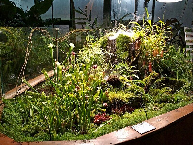 тропическая оранжерея с хищными растениями в Аптекарском огороде