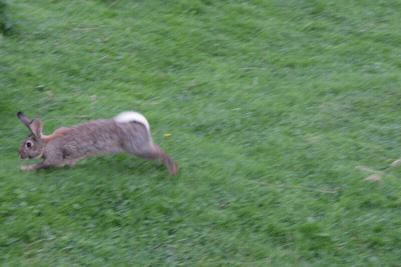 5. Убегающий кролем...