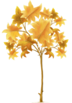 tree (35).png