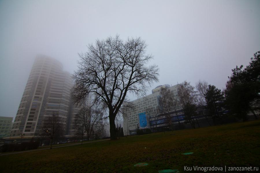 Белоруссия. Минск. Дерево.