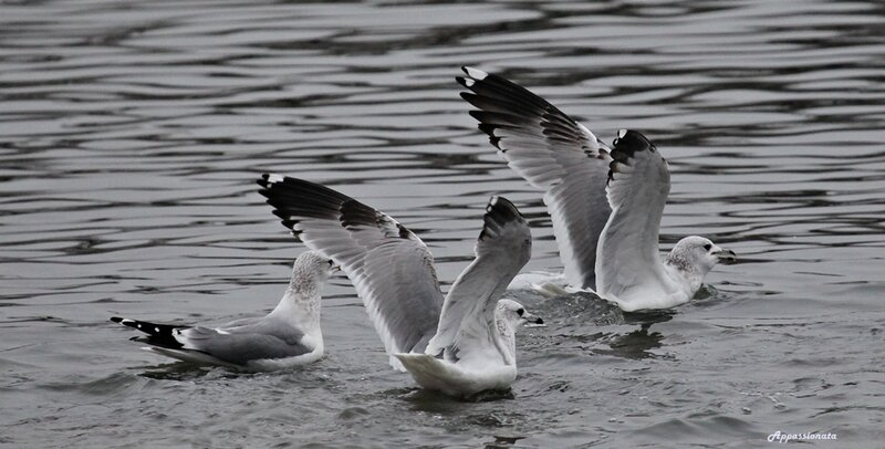 Птицы в Царицыно