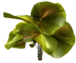 Palms  (39).png