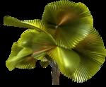 Palms  (39).png