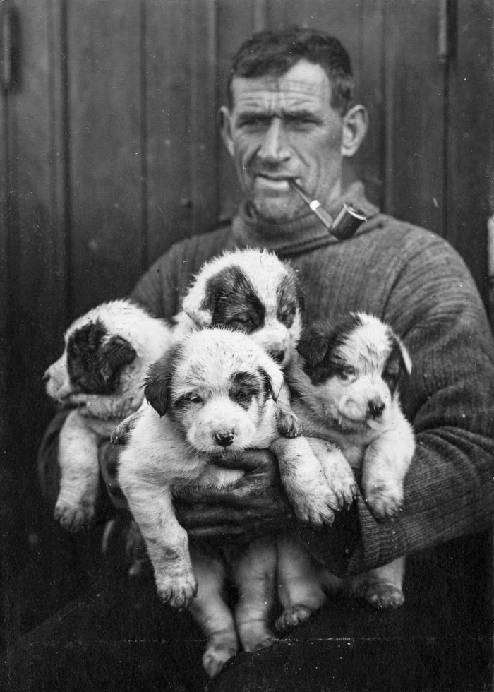 17. Второй помощник капитана Том Крин со щенками ездовых собак.