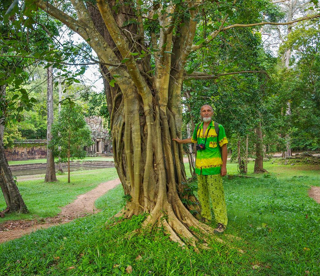 Такие деревья
