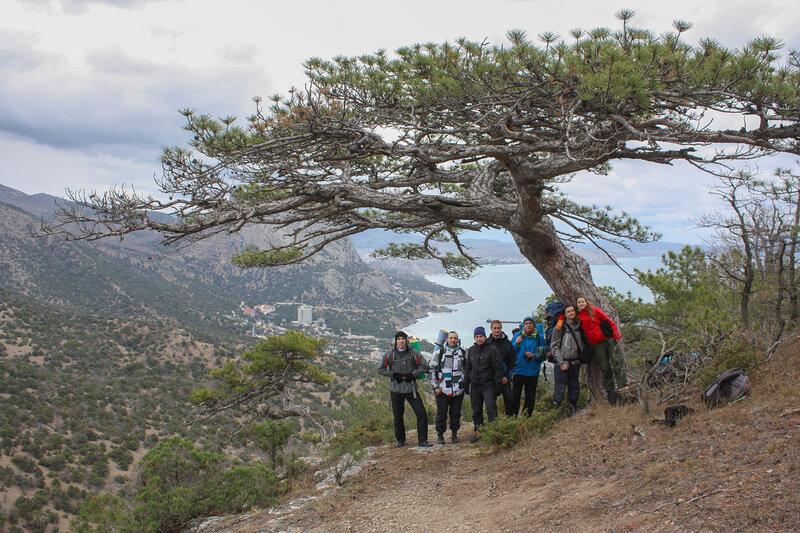 Встретили дерево-бонсай, сфотографировались