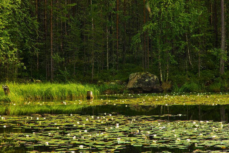 Кувшинковое озеро на острове Сосновый