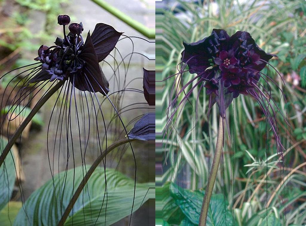 Чёрные цветы обои
