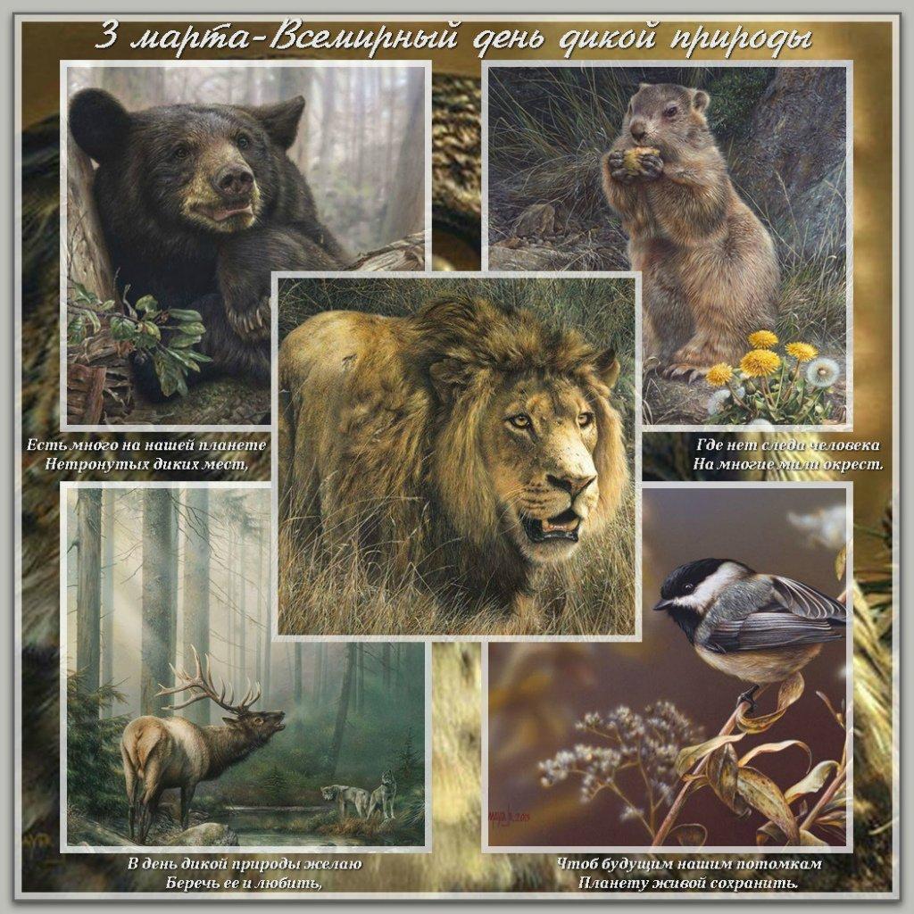 Открытки Всемирный день дикой природы открытки фото рисунки картинки поздравления