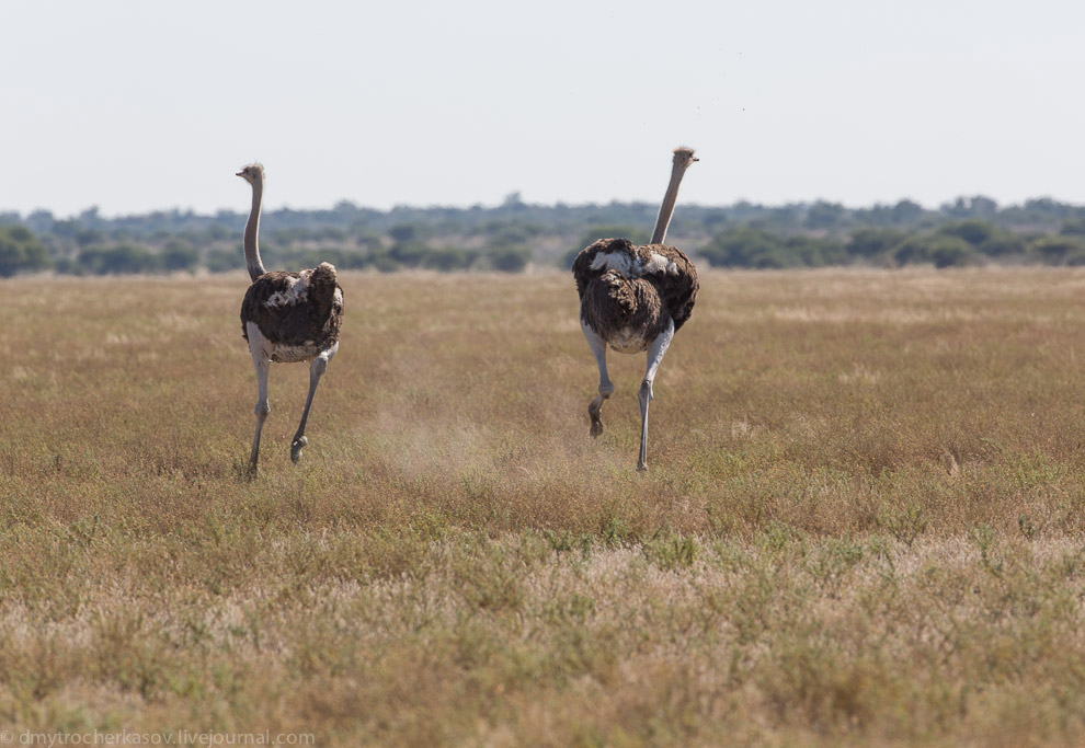 Африка животные Южная Африка самое интересное пустыни пустыня слово слова