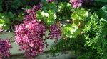 ...что-то так красиво цветет????