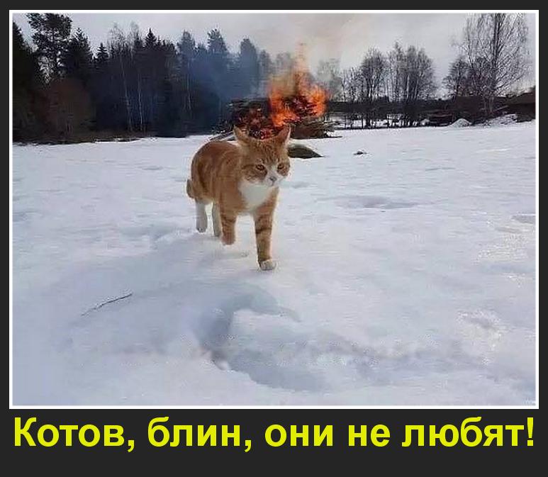 Котов, блин, они не любят!