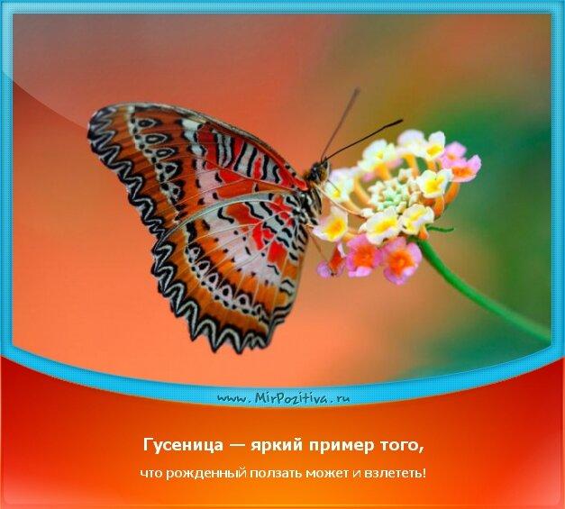 позитивчик дня - Гусеница — яркий пример того, что рожденный ползать может и взлететь!