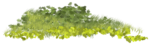 Bush and Grass  (128).PNG