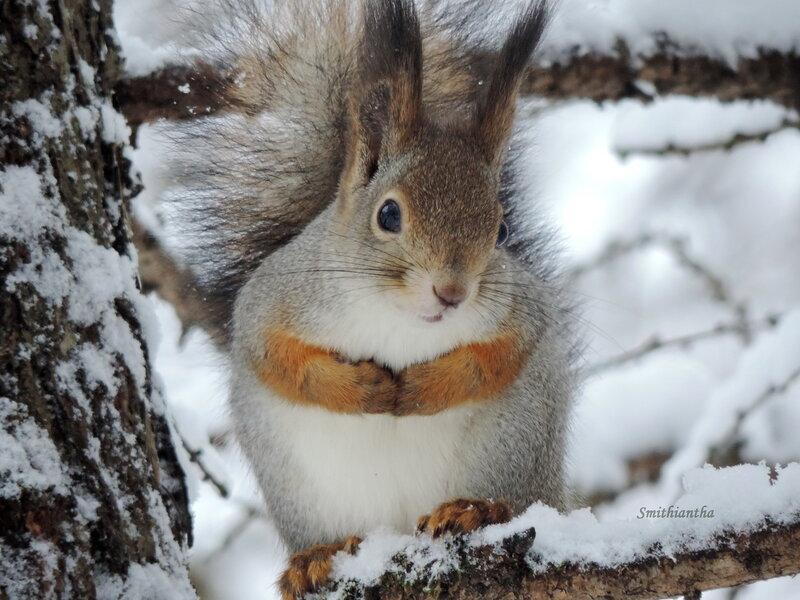 Маленькой белочке холодно зимой :)