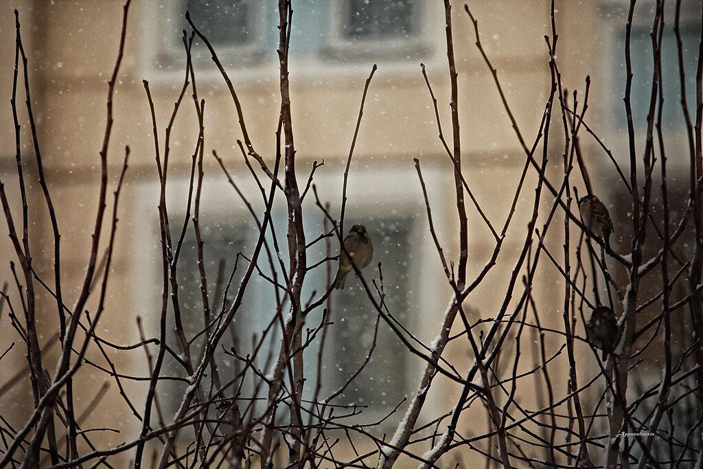 Зимние птицы 2013