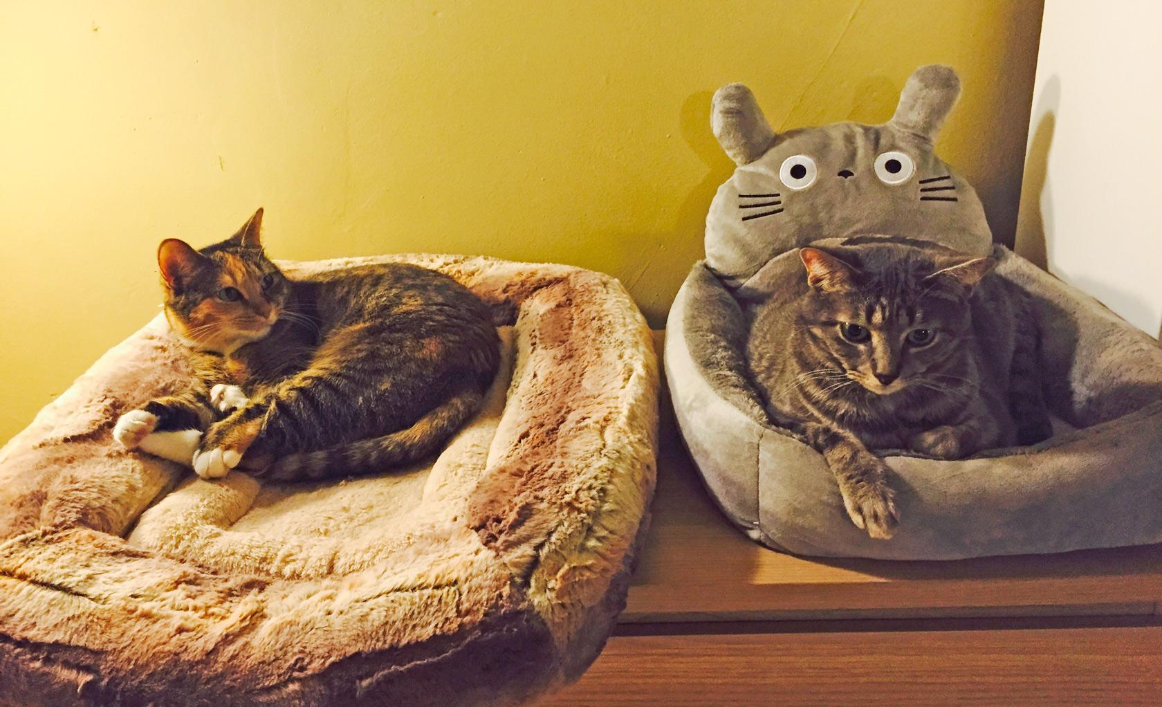 две кошки в доме как должны спать фото