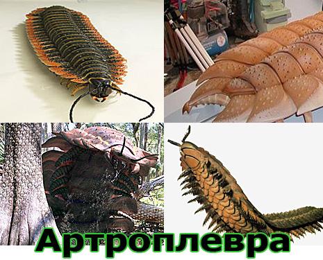 Самые большие животные в мире, существовавшие на земле (фото 12)