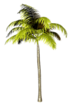 Palms  (35).png
