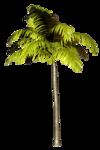 Palms  (35).png