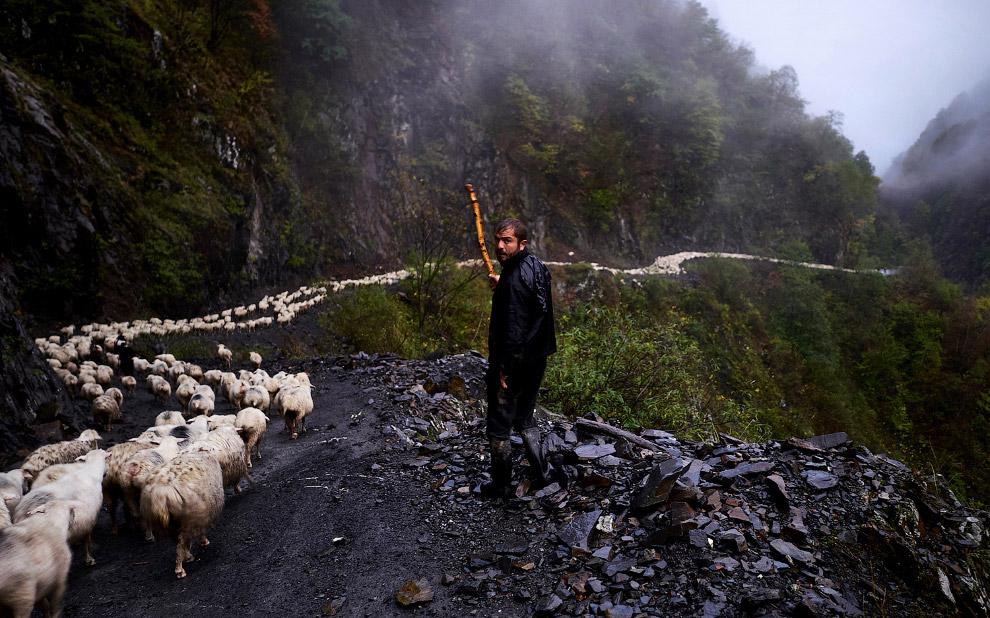19. Четвероногий пастух. (Фото Amos Chapple | Radio Free Europe | Radio Liberty):