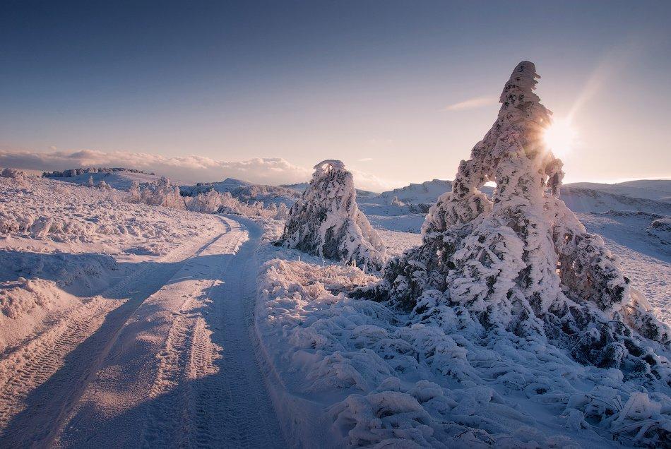 Снежные деревья: