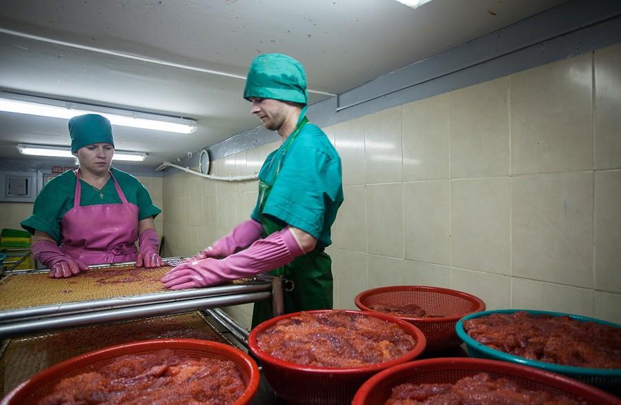 Как делают красную икру на Сахалине