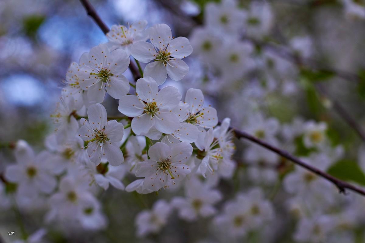 Весна в Коломенском