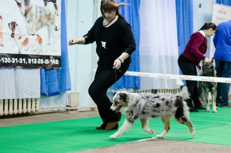 Выставочные успехи наших собак - 5 - Страница 6 0_99b38_44853d9d_XL