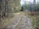 Лесная дорога от Аристово на ур. Тверитинка