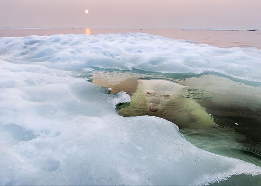 Победители конкурса National Geographic Photo Contest 2013