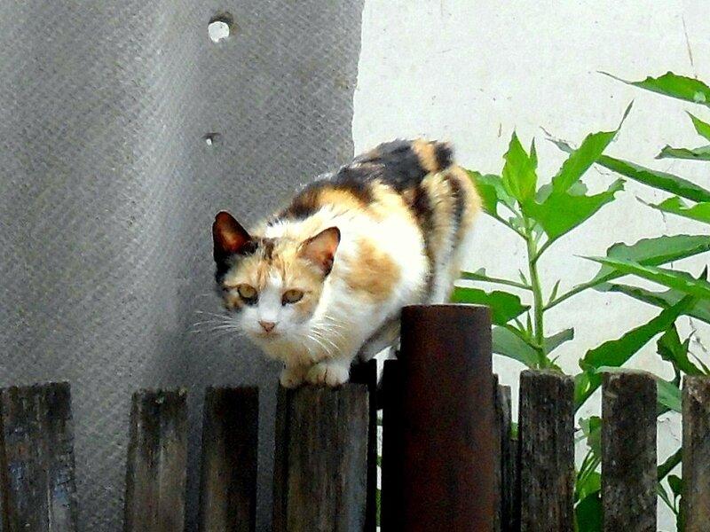 Из мира кошачьего...