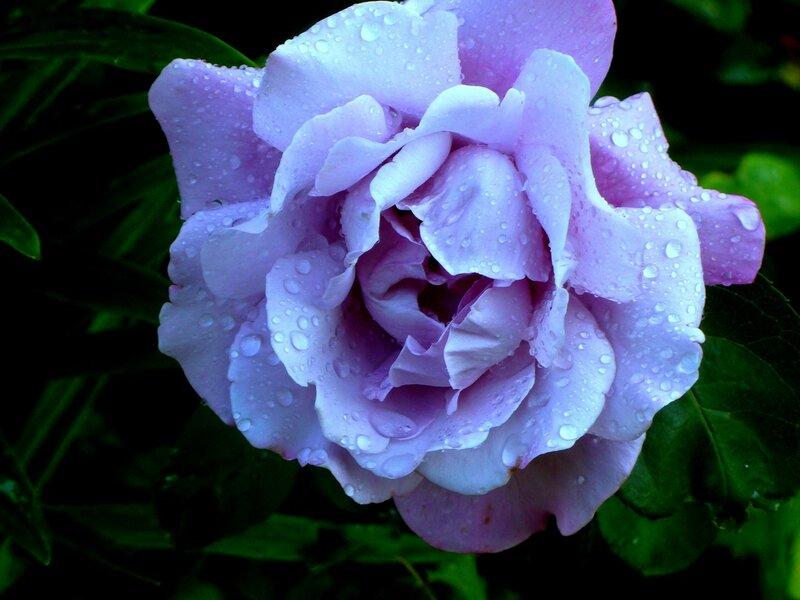 Шарль де Голль. После дождя.
