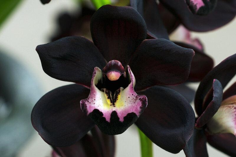 скачать через торрент черный цветок - фото 8