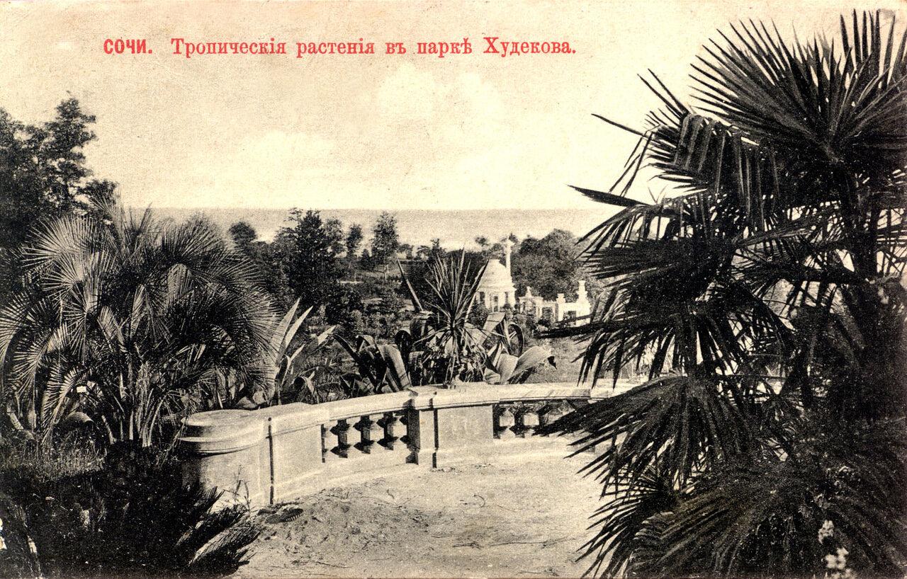 В парке Худекова. Тропические растения