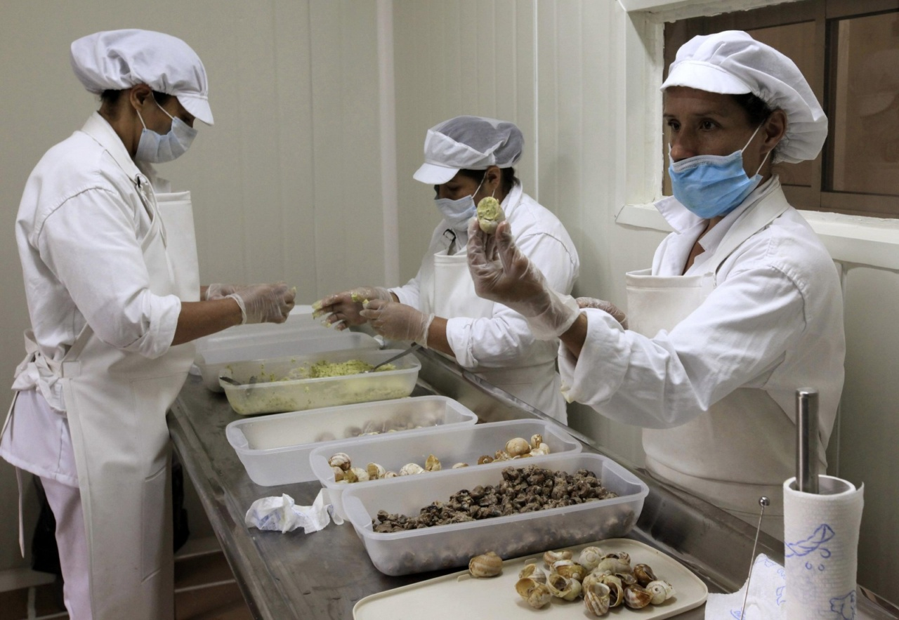 Workers prepare the meat of snails (Helix Aspersa), cooked and packed in their shells, in a farm near Choachi