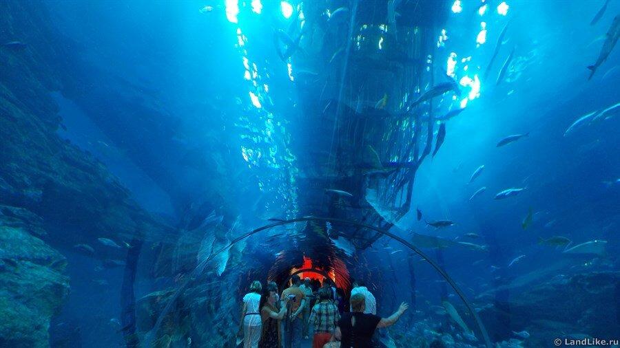 тоннель в океанариуме
