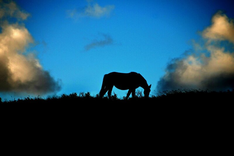 Ходят кони над рекою...