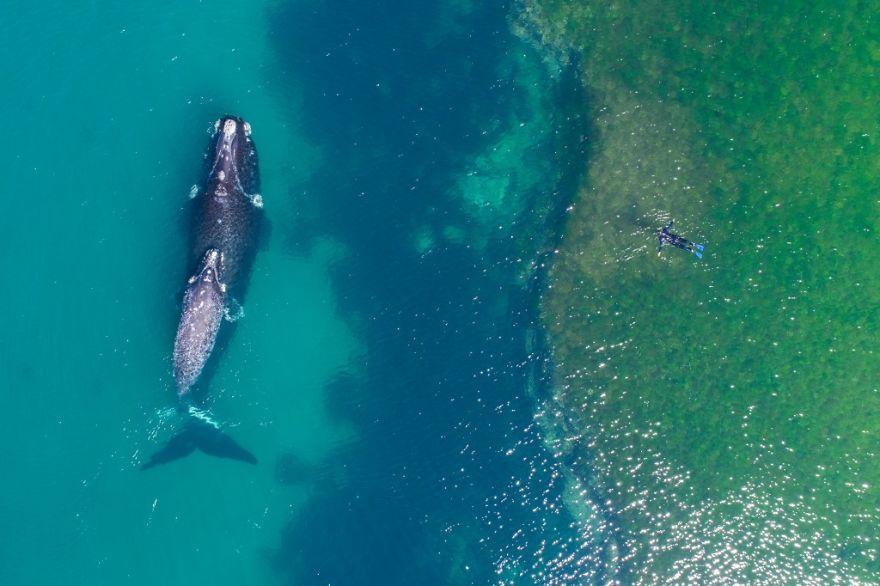 Плавая с китом. Автор фото: DroneFilmsProject.