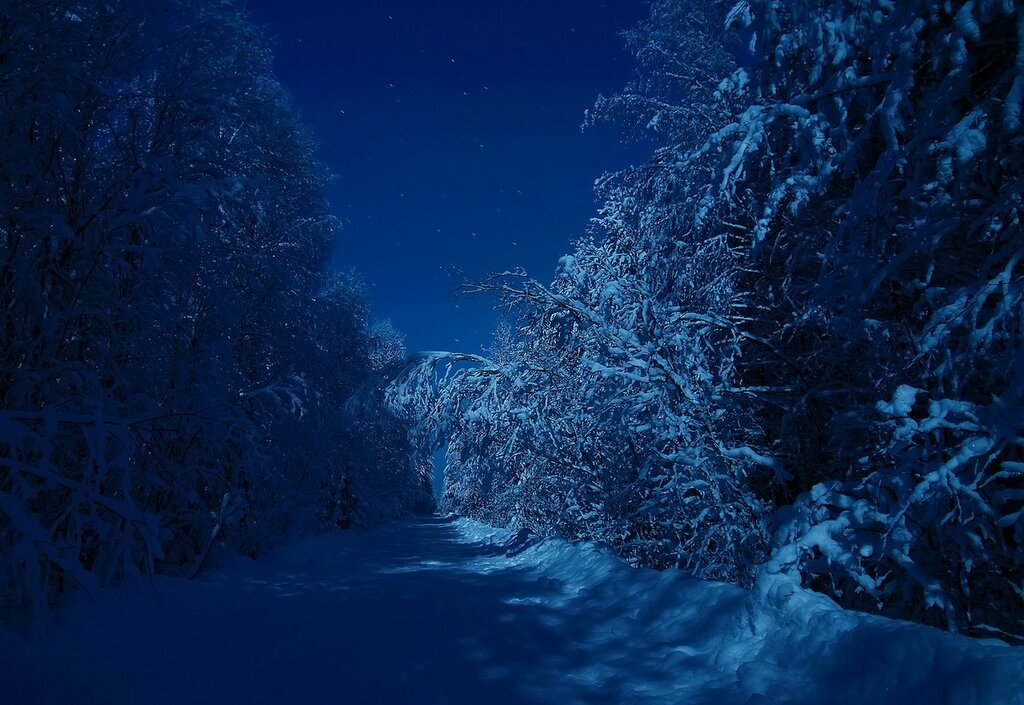 Дорога в лунную ночь