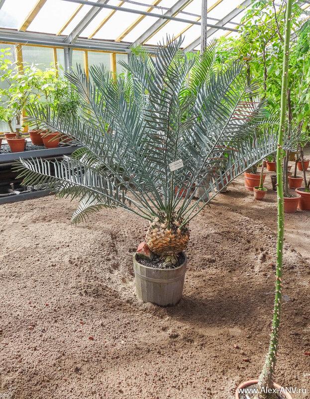 В этой зоне почему-то растения расставлены как в пустыне - на голом песочке.