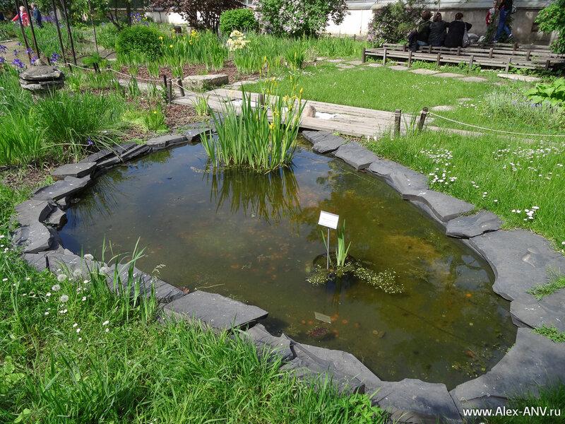 Пруды в цветнике гораздо меньше, нежели в парке. И рыбы в них нет, как в оранжереях.