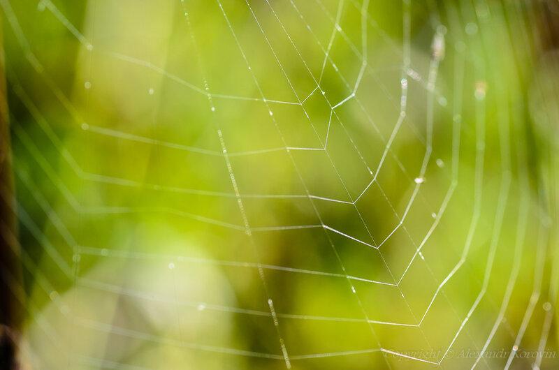 Ловчие сети