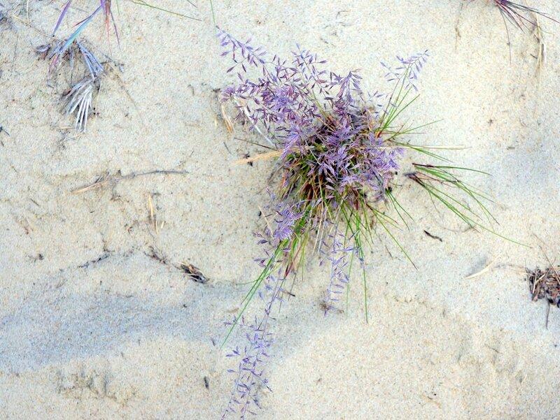 Синяя трава