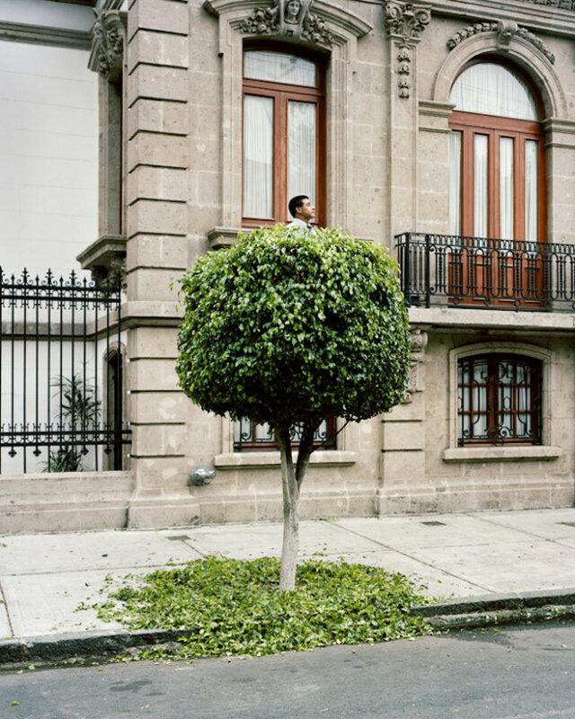 дерево прикол