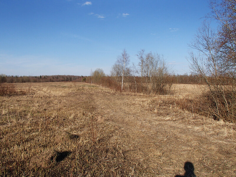 урочище отлизно в тесовских болотах