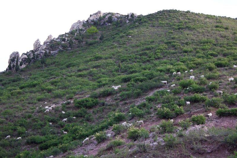стадо на склоне в горах инь шань, внутренняя монголия, китай