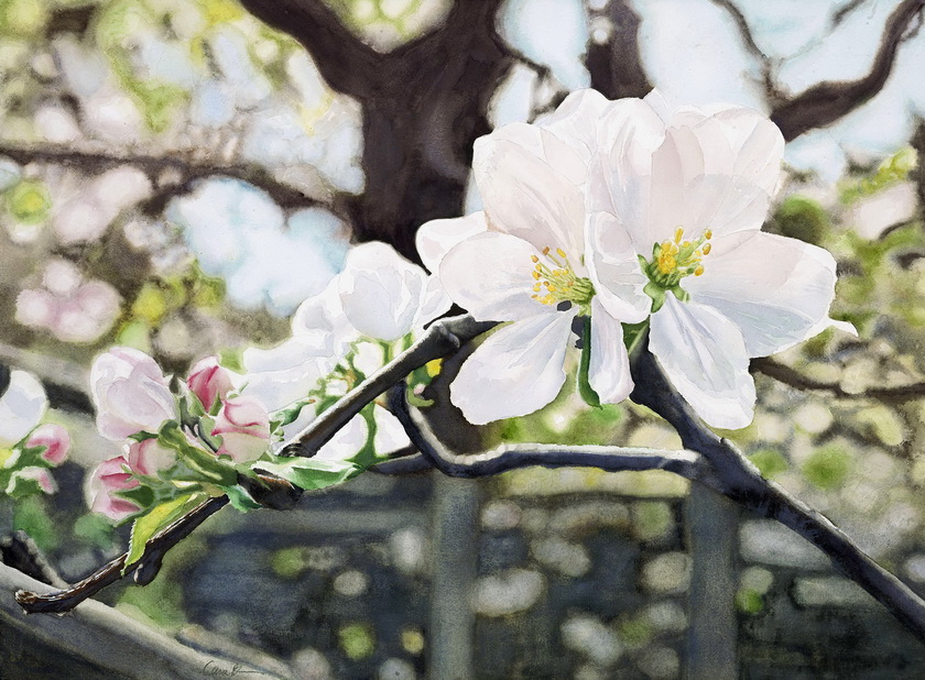 Brown Apple Blossom Spring, 4/25/07, 2:39 PM, 16C, 6000x7500 (0+0), 100%, Custom,  1/30 s, R56.9, G52.7, B69.6