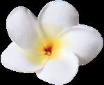 vesidn_seamemories_flower5 .png